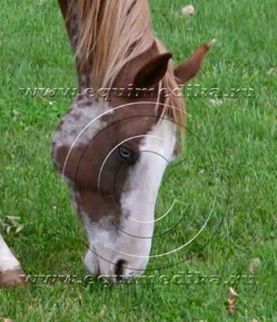 лошадь ест copy.jpg